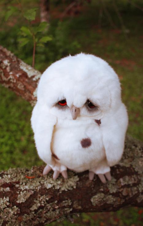 hohmodrom_sad_owl_3_by_distasty.jpg